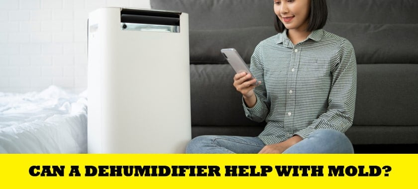 Can A Dehumidifier Help With Mold?