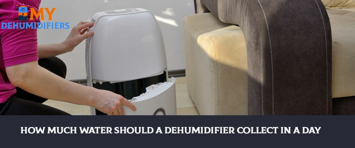 How Much Water Should A Dehumidifier Collect In A Day?